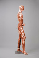Mannequins Shiny Copper 5 Series
