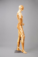 Mannequins Shiny Gold 5 Series