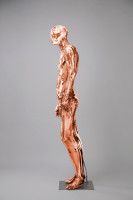 Mannequins Shiny Copper 1 Series